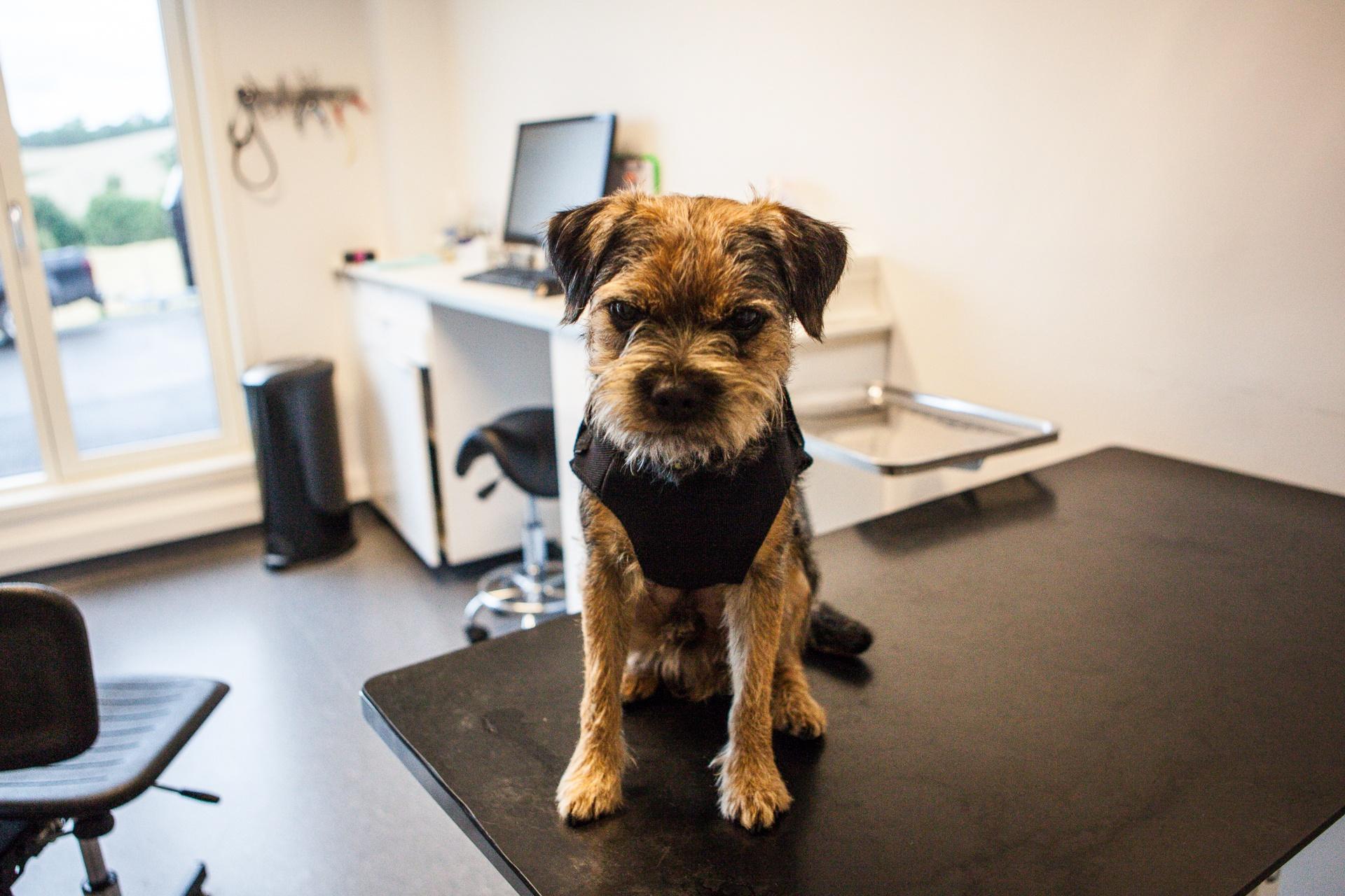 konsultasjon hos veterinær