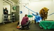 Håndverkerne på klinikken