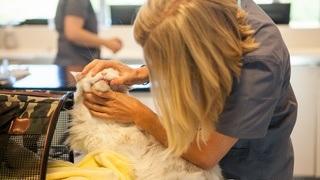 Tannproblemer gjør like vondt for dyr som for mennesker
