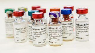 Nye anbefalinger for vaksinering av valp