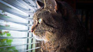 Slik tolker du kattens 5 vanligste lyder